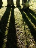 Tree shadows Stock Photo