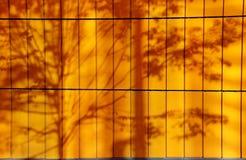 Tree shadows. Against an orange wall Royalty Free Stock Photo