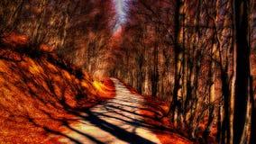 Tree shadows Stock Photos