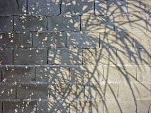 Tree Shadows in Concrete Wall Royalty Free Stock Images