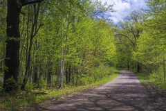 Tree shadows, country road, spring Royalty Free Stock Images