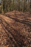 Tree shadows falling across a walking path royalty free stock photos