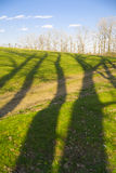 Tree shadows and forest Royalty Free Stock Photo