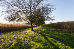 Tree Shadows on the Grass Royalty Free Stock Images