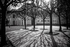 Tree shadows in morning Dresden Royalty Free Stock Image