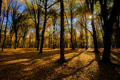 Tree shadows in mountain forest with sunbeams. Royalty Free Stock Photography