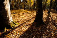 Tree shadows in mountain forest with sunbeams. Royalty Free Stock Images