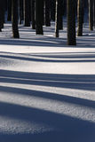 Tree shadows on snow Royalty Free Stock Image