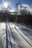Tree Shadows in Snow. Long shadows of birch trees in freshly fallen snow Royalty Free Stock Image