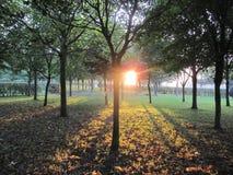 Shadows At Sunset royalty free stock image