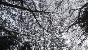 Tree. A shady tree Royalty Free Stock Photography