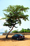 Tree shady Stock Image