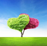 Tree in shape of heart Stock Image