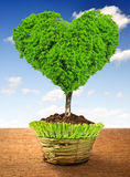 Tree in the shape heart. Growing in the pot Royalty Free Stock Images