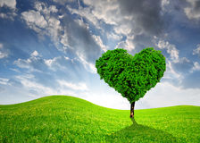 Tree in the shape of heart Stock Images