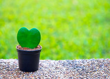 Tree in the shape of heart, valentines day background, Stock Photo