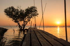 Tree in the shape of heart with wood bridge on the sea at twilight in Bangpu , in Thailand Royalty Free Stock Photography