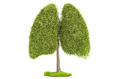 Tree in the shape of lungs, eco concept. 3D rendering. Isolated on white background Vector Illustration