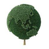 Tree shaped as the Earth facing Asia. Topiary bush shaped as the Earth facing Asia Royalty Free Stock Images