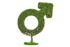 Tree shaped as male gender symbol, 3D rendering stock illustration