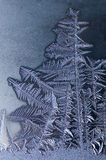 Tree shaped frost patterns on winter window Stock Photos