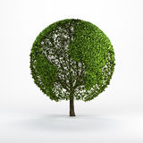 Tree shaped like the world map Royalty Free Stock Photography