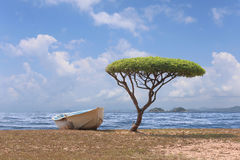 Tree shaped mushroom near the sea and one boat in bright weather Stock Image