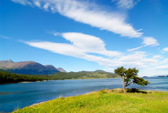 Tree shaped by the wind in patagonia. Parque Nacional Tierra del Fuego royalty free stock photography