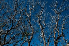 Shed leaves. The tree shed leaves with blue sky background Royalty Free Stock Photos