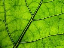 Tree sheet Stock Image