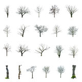 Tree without sheets with choosing Royalty Free Stock Photos