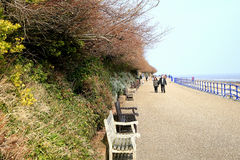 Tree shelter. EASTBOURNE, EAST SUSSEX, UK. MARCH 18, 2015. Trees overhang the promenade seating at Holywell bay in Eastbourne, Sussex, UK royalty free stock photography