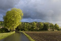 Tree shines in the sunlight after a heavy thunderstorm. In Switzerland Stock Images