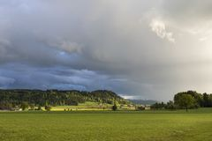 Tree shines in the sunlight after a heavy thunderstorm. In Switzerland Royalty Free Stock Image