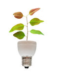 Tree shoot growing from base of flourescent lamp Royalty Free Stock Photography