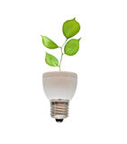 Tree shoot growing from fluorescent lamp Stock Photos