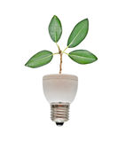 Tree Shoot Growing From Base Of Flourescent Lamp Stock Image