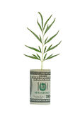 Tree Shoot Growing From Dollar Bill Royalty Free Stock Photography