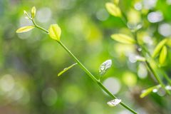 Tree shoots on bokeh background stock image