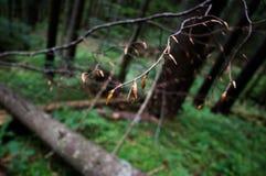 The tree shoots Stock Photo