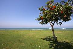 Tree on the shore Royalty Free Stock Photos