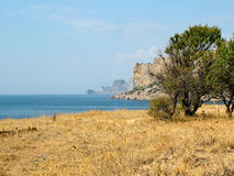 The tree on the shore of the Black Sea. In eastern Crimea Stock Image