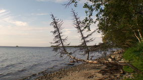 Tree on the shore and calm water of White Sea. Beautiful landscape of wild nature. Quiet and calm ecotourism in Russia. Panorama of way to cold Karelia stock video footage