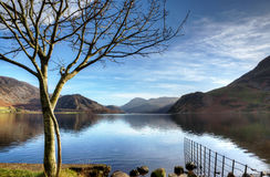 Tree on the shore of Ennerdale Water Royalty Free Stock Photography