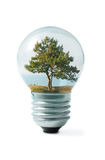 Tree on shore in Light bulb collage Stock Photos