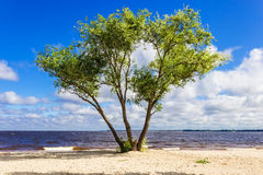 Tree on the shore of the reservoir Royalty Free Stock Photography