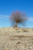 Tree at the shore of the Rhine Rhein Royalty Free Stock Photo