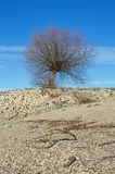 Tree at the shore of the Rhine Rhein Royalty Free Stock Image