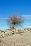 Tree at the shore of the Rhine Rhein Royalty Free Stock Photography