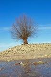 Tree at the shore of the Rhine Rhein Royalty Free Stock Photos